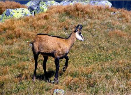 Parku Kombëtar Pelister