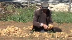 Во септември и октомври во општина Шиштавец, областа Гора и општина Стеблево, областа Голо Брдо, области населени со македонско население, време е за собирање на компирот. Ова година производството […]