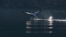 Стручниот Комитет на УНЕСКО разгледувајќи ја номинационата форма за прогласување на Преспанско-охридскиот регионза Биосферен резерват даде препорака и одобрение до Интернационалниот Совет на УНЕСКО, да го прогласи македонскиот и албанскиот […]